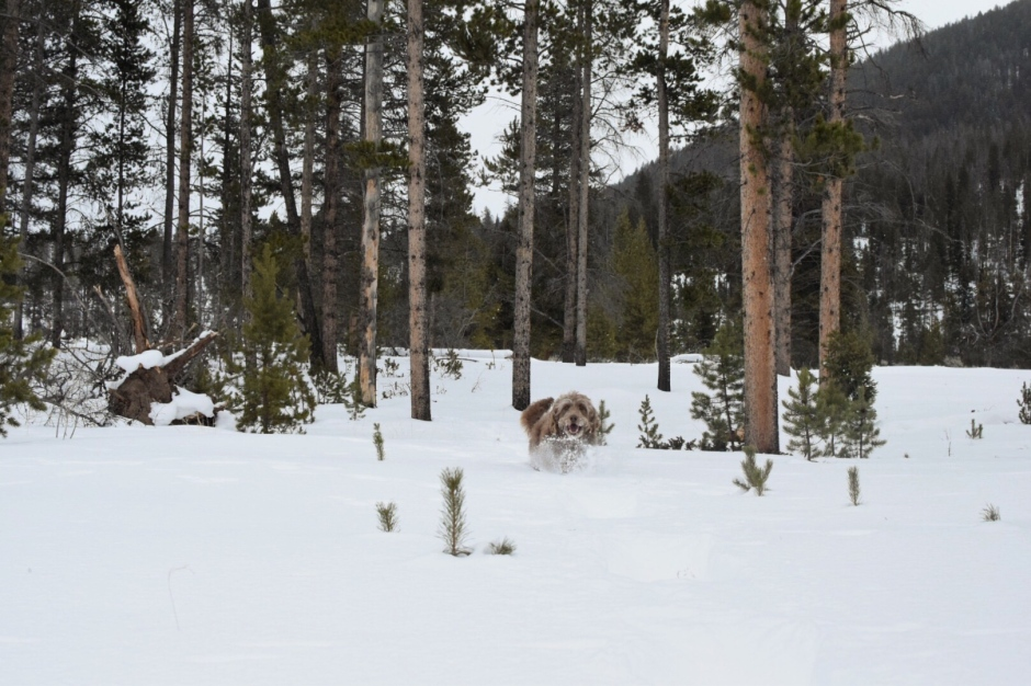 wolf9